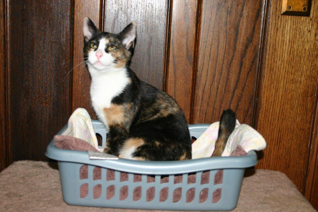 cat peeing outside litter box solutions